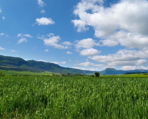 Paisaje desde el camino a Bujanda / Bidetik Bujandarako paisaia